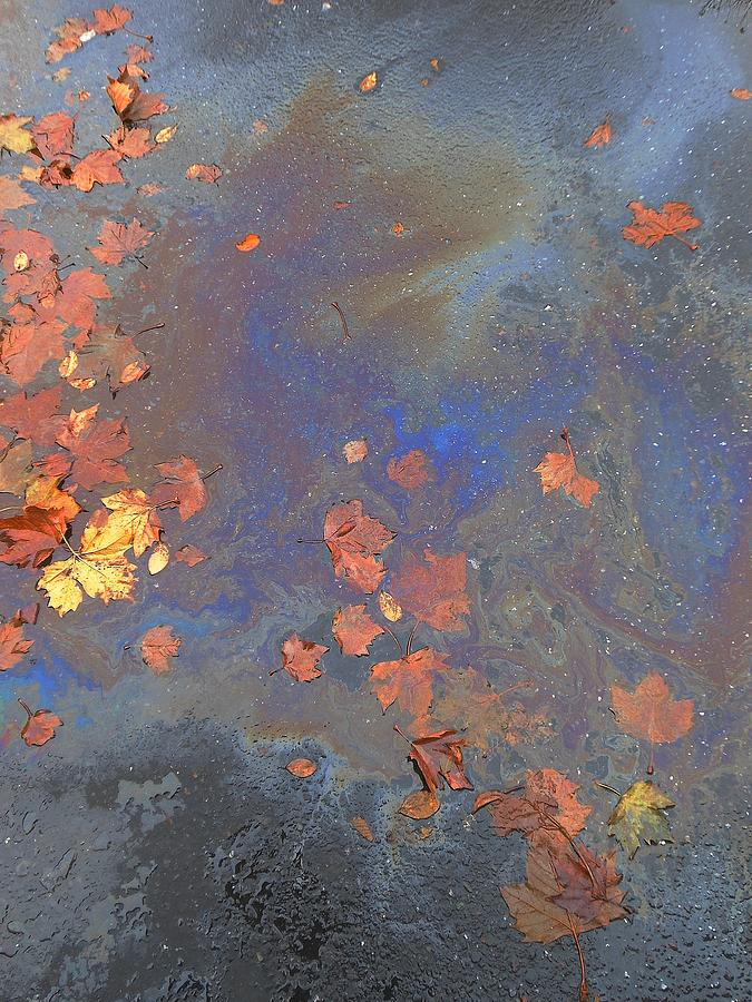 Autumn Puddle by John Norman Stewart
