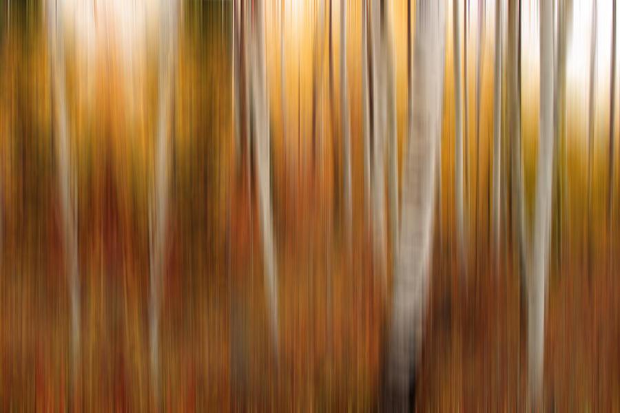 Autumn Quakies Impressionistic Photograph