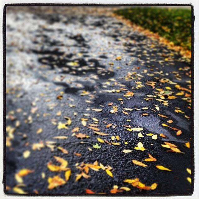 Autumn Rain Photograph by Heidi Hermes