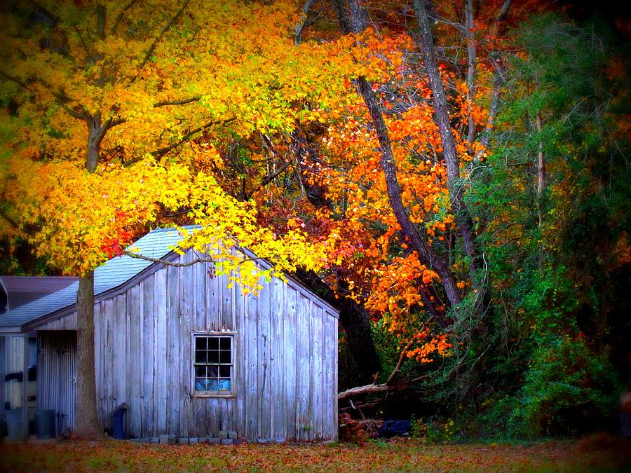 Autumn Rest Photograph by Trish Clark