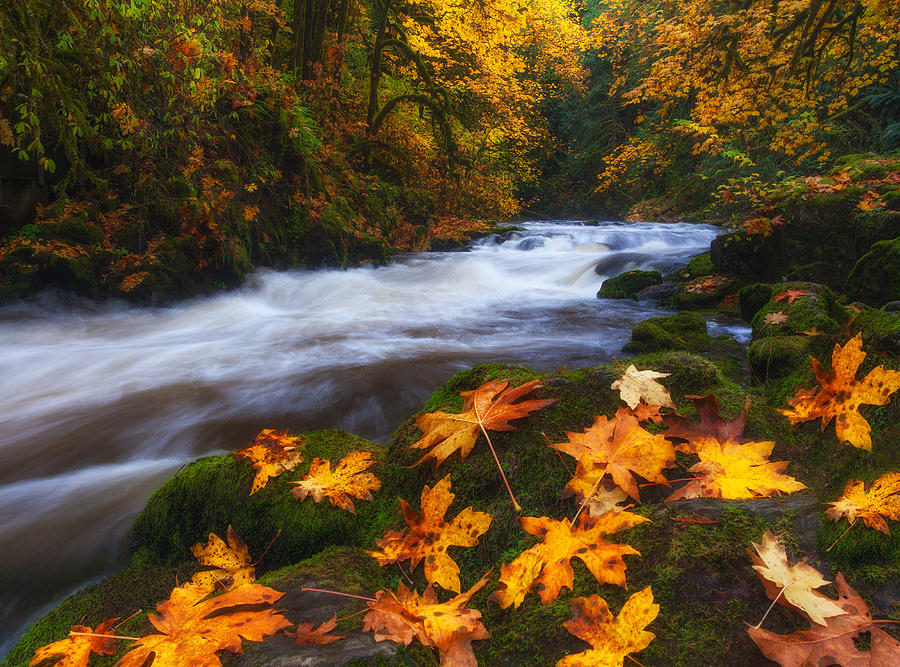Fall Photograph - Autumn Returns by Darren  White