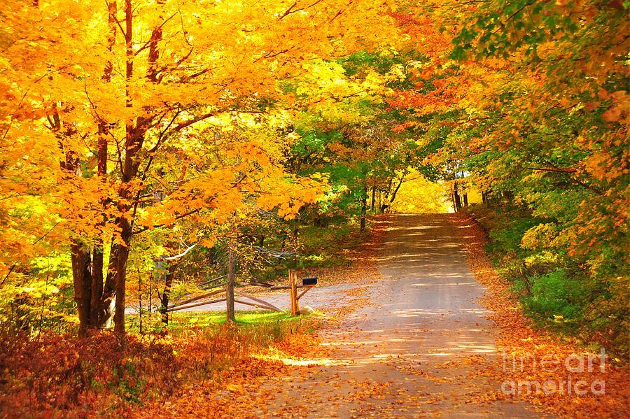 Autumn Photograph - Autumn Road Home by Terri Gostola