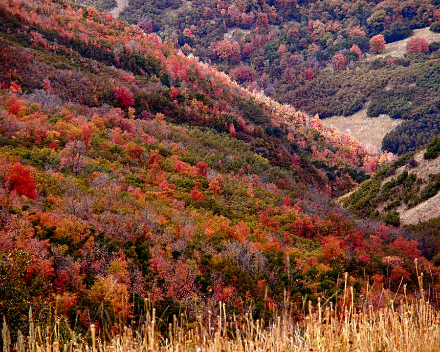 Autumn Photograph - Autumn by Rona Black