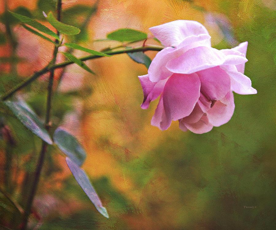 Rose Photograph - Autumn Rose by Theresa Tahara