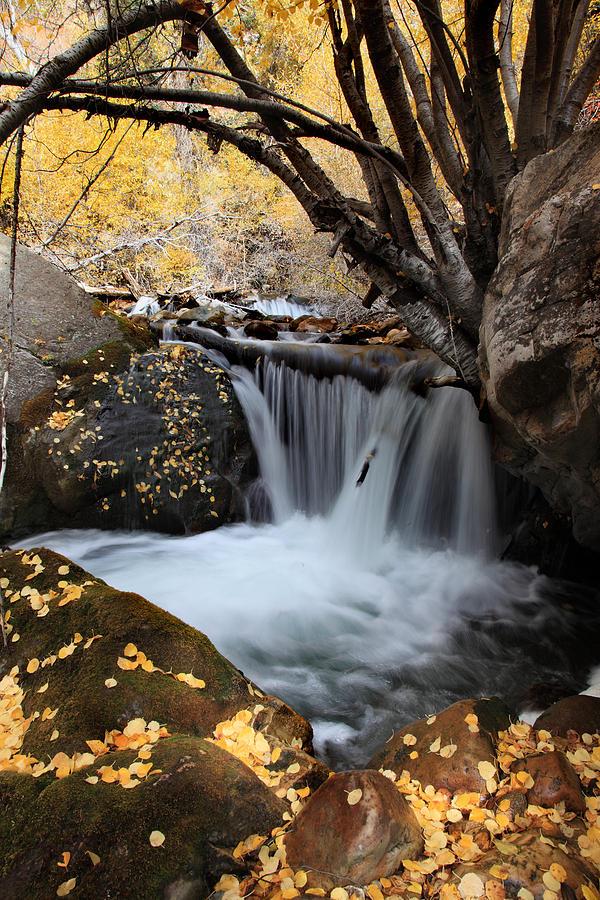 Autumn Colors Photograph - Autumn Rush by Darryl Wilkinson