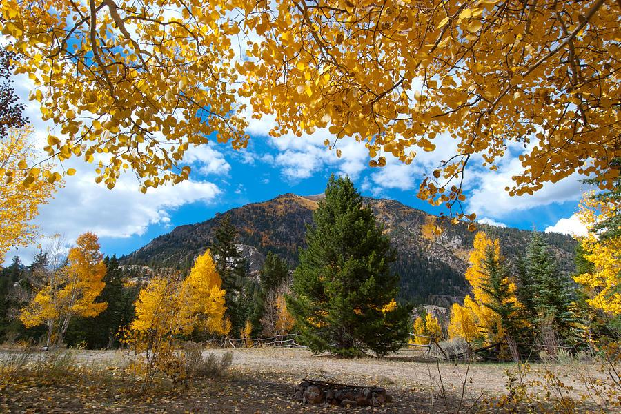 Colorado Photograph - Autumn Scene Framed By Aspen by Cascade Colors
