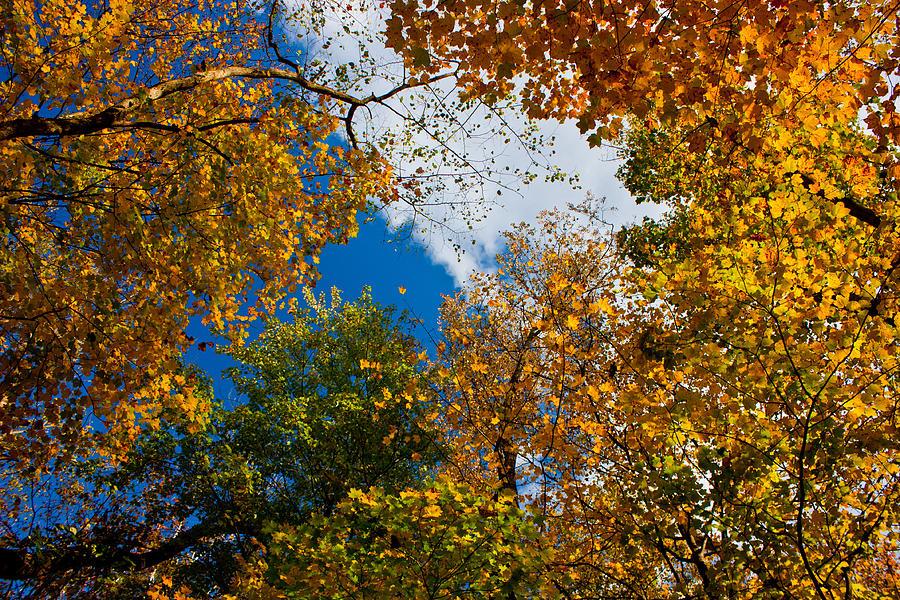 Brandywine Photograph - Autumn Sky by Claus Siebenhaar