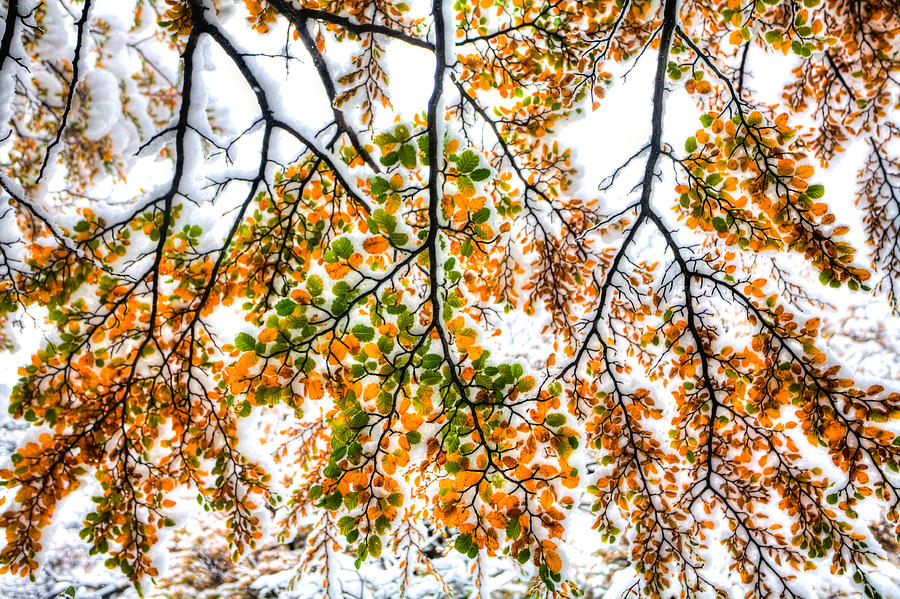 Argentina Photograph - Autumn Snow by Roman St
