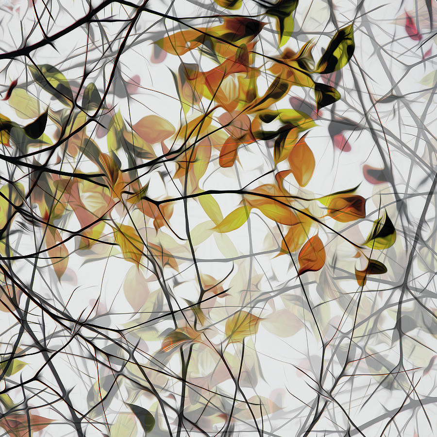Branches Photograph - Autumn Song by Gilbert Claes