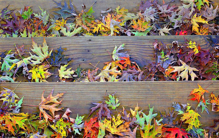 Autumns Photograph - Autumn Steps by William Schmid