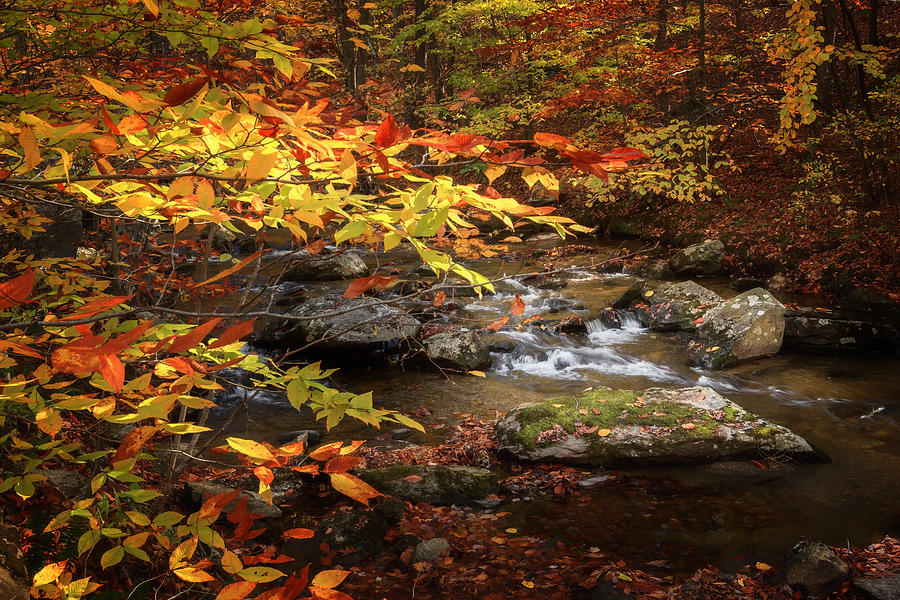 Connecticut Photograph - Autumn Stream by Bill Wakeley
