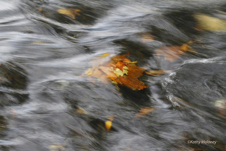 Autumn Stream by Kathy Maloney
