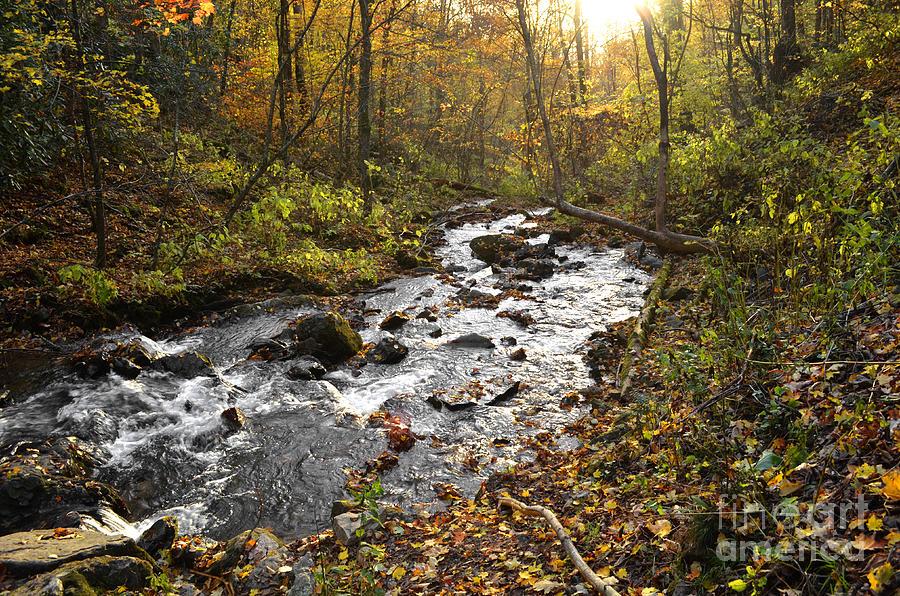 Soco Falls Photograph - Autumn Streams of Soco Falls by Debra Johnson