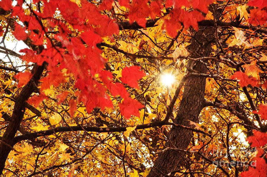 Starburst Photograph - Autumn Sunrise Painterly by Andee Design