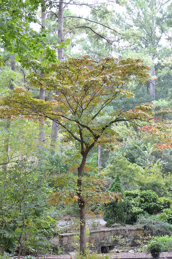 Tree Photograph - Autumn Surrounds Me by Maria Urso