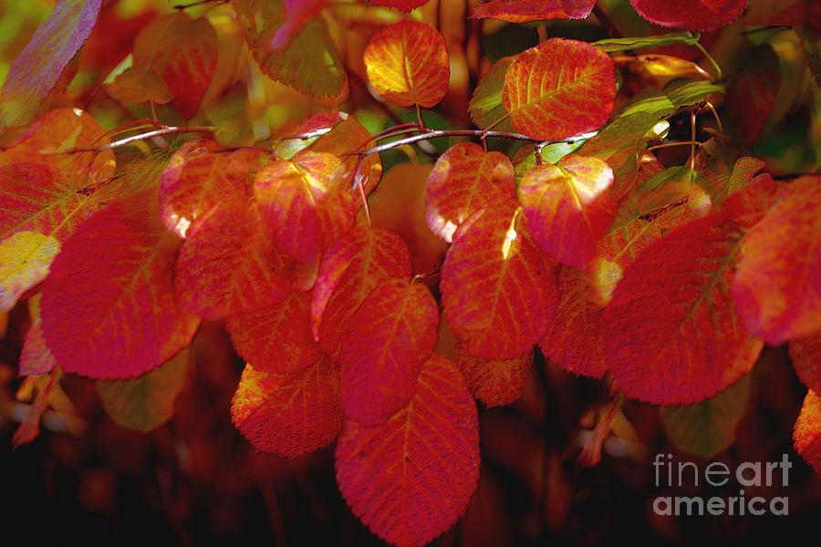 Autumn Photograph - Autumn by Sylvia  Niklasson