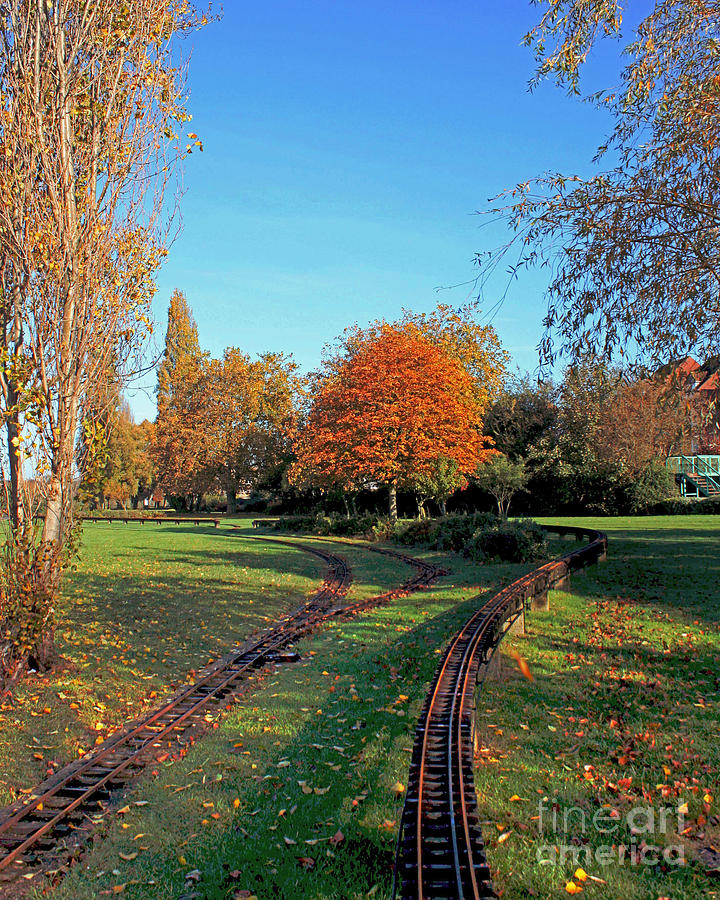 Autumn Forest Photograph - Autumn Tracks by Terri Waters