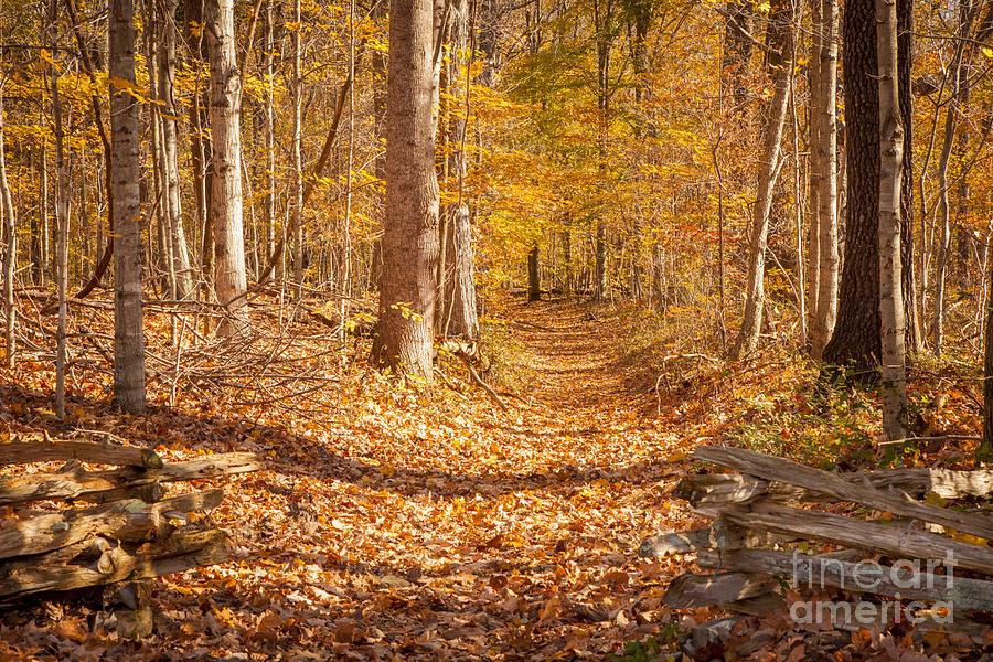 America Photograph - Autumn Trail by Brian Jannsen