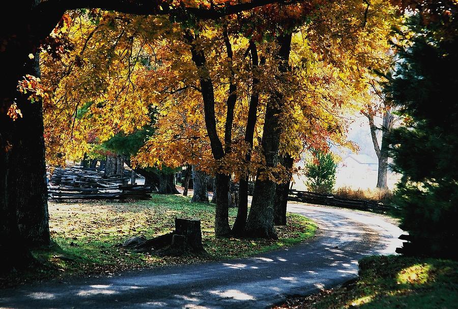 Autumn Trail Photograph by John Saunders
