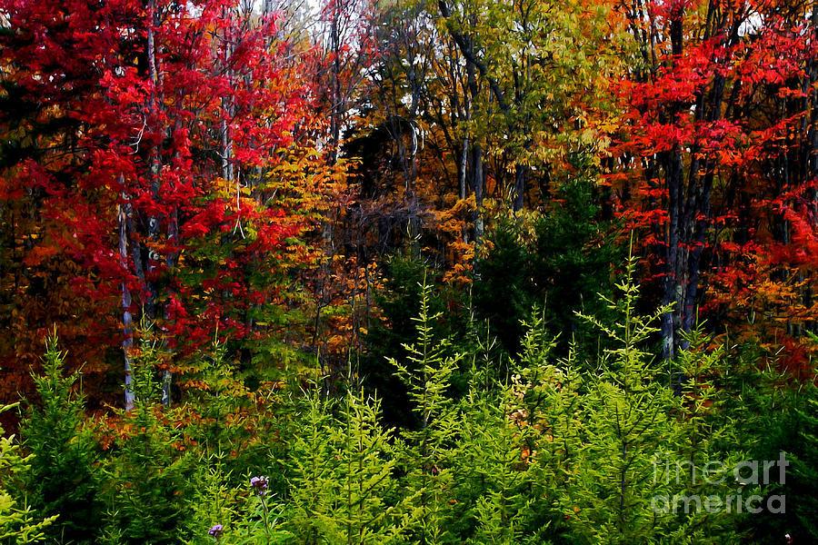 Autumn Tree Foliage Painting - Autumn Tree Foliage by Lanjee Chee