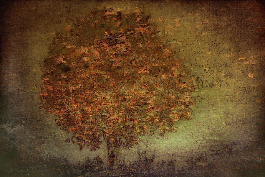Autumn Photograph - Autumn Tree by Nel Talen