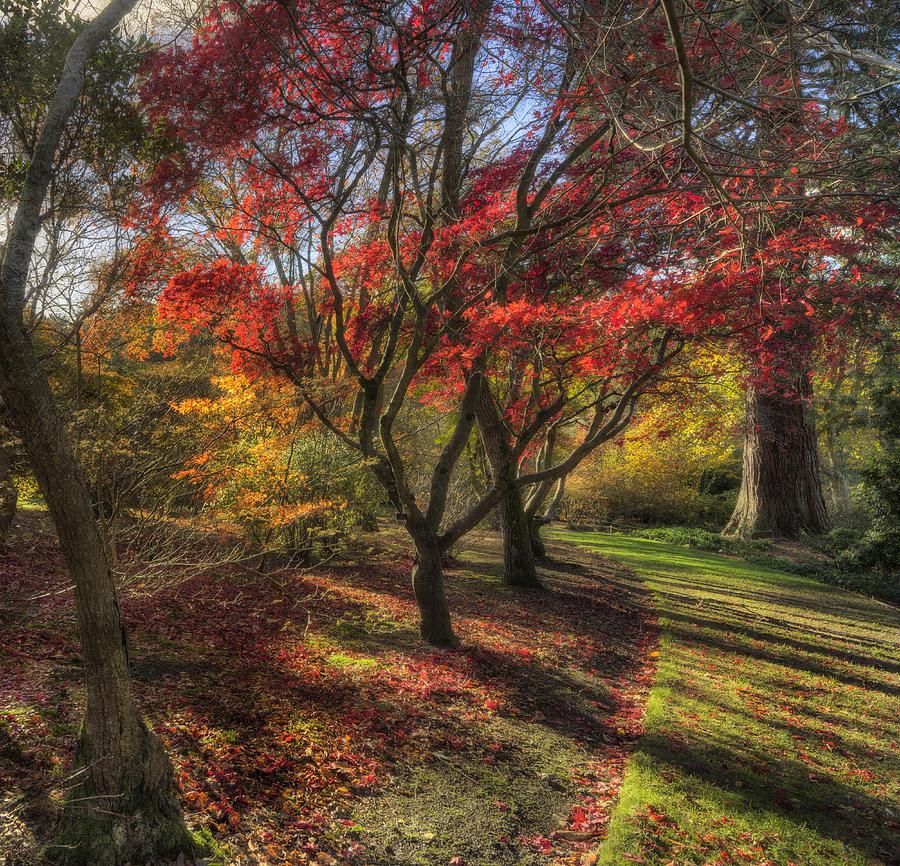 Autumn Photograph - Autumn Tree Sunshine by Ian Mitchell