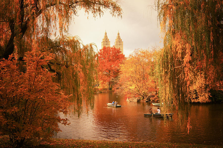 Autumn Photograph - Autumn Trees - Central Park - New York City by Vivienne Gucwa