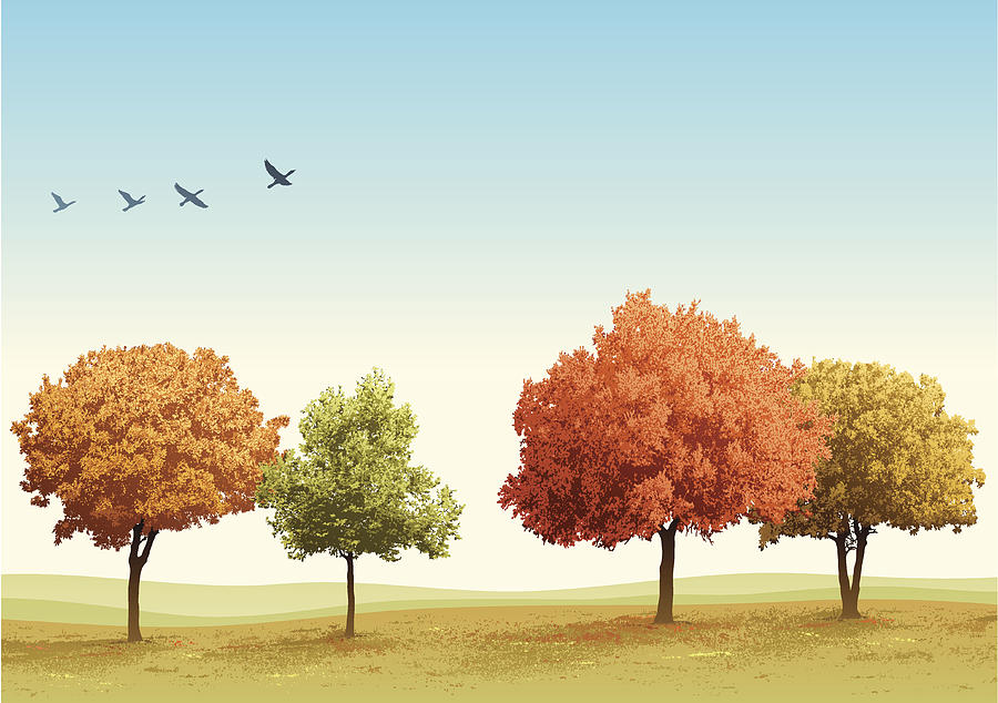 Autumn Trees Drawing by Edge69