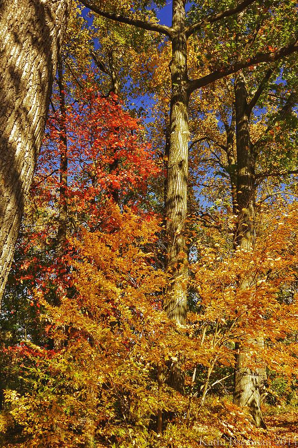 Autumn Photograph - Autumn Trees by Kathi Isserman