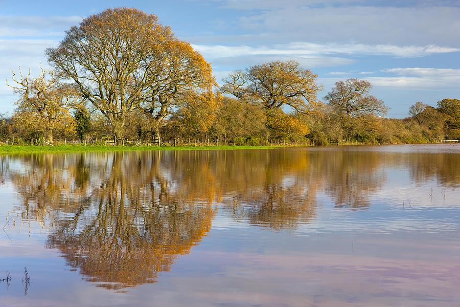 England Photograph - Autumn Trees by Sebastian Wasek