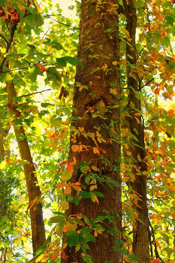 Autumn Photograph - Autumn Vines by Candice Trimble