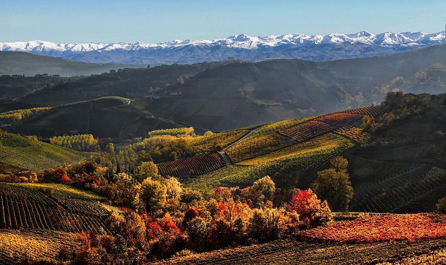 Autumn Vineyard Photograph by Jrd