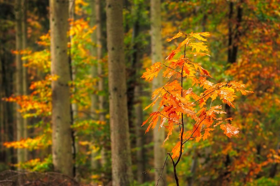 Autumn Photograph - Autumn Walk In The Forest by Maciej Markiewicz