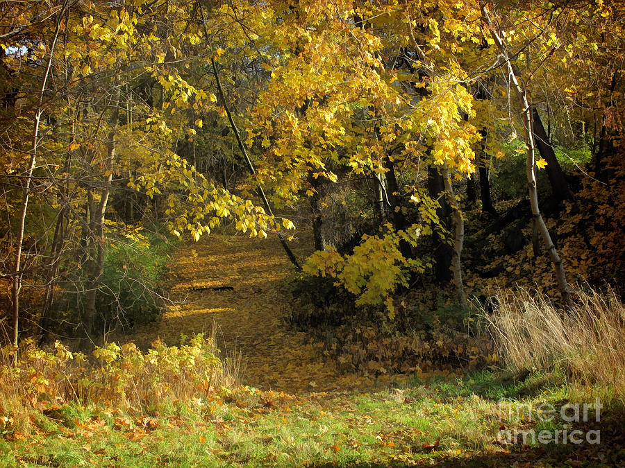 Baar Photograph - Autumn Walk by Lutz Baar
