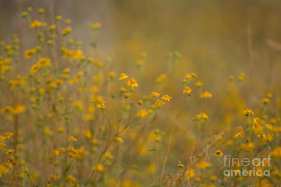 Autumn Photograph - Autumn Wildflowers  by Phyllis Bradd