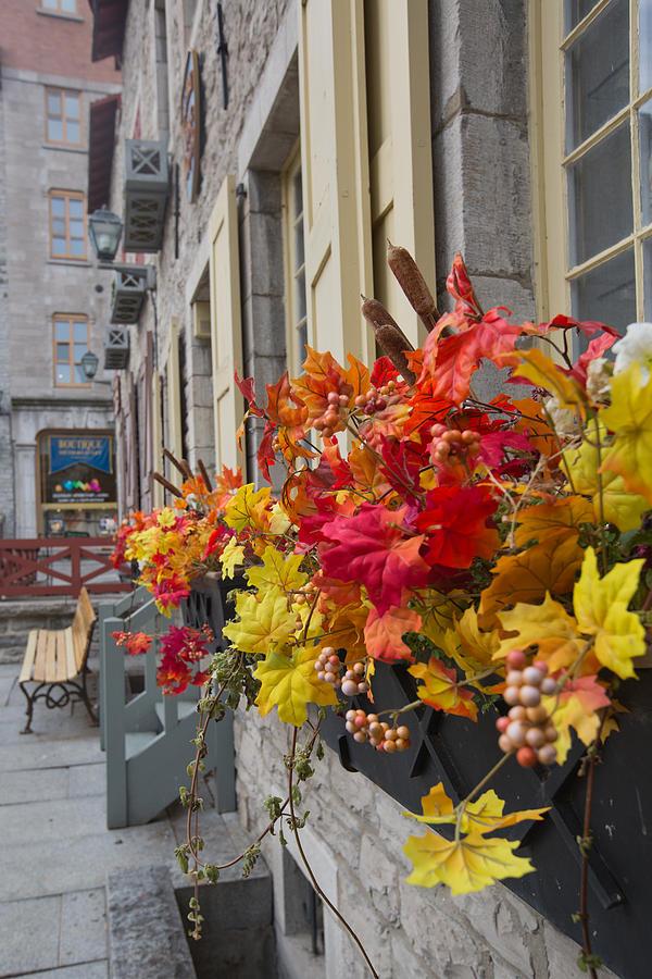 Window Photograph - Autumn Window Box by Gordon  Grimwade