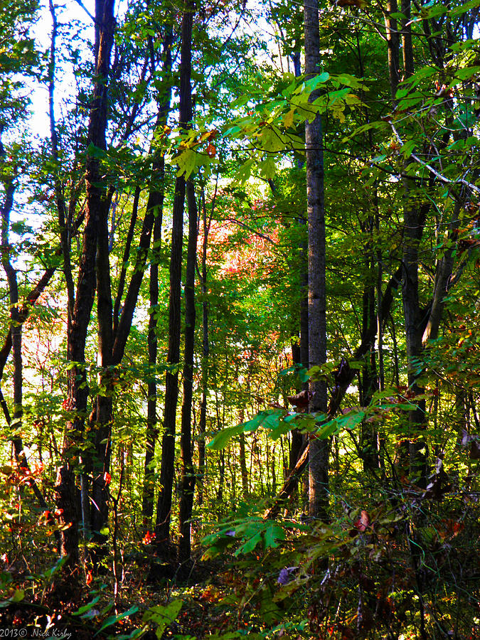 Fall Photograph - Autumn Wood by Nick Kirby