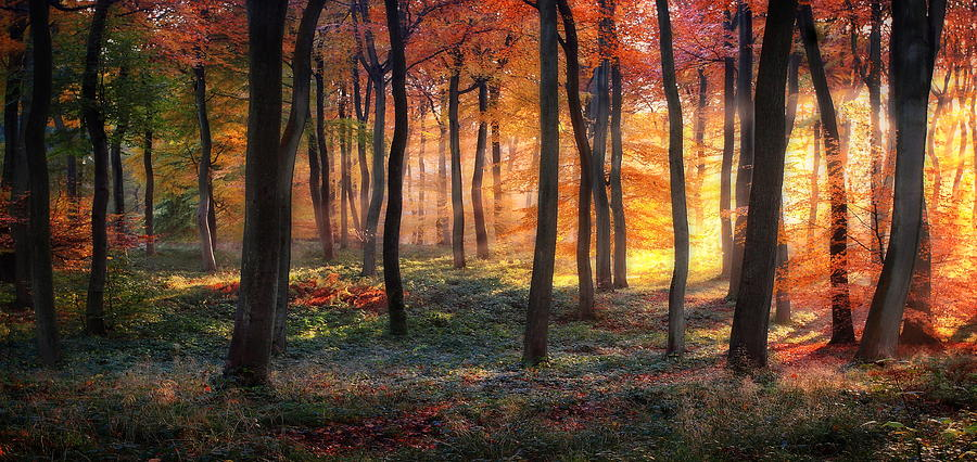 Landscape Photograph - Autumn Woodland Sunrise by