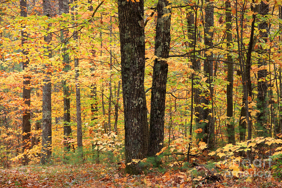 Fall Color Photograph - Autumn Woods 1 by Michael Mooney