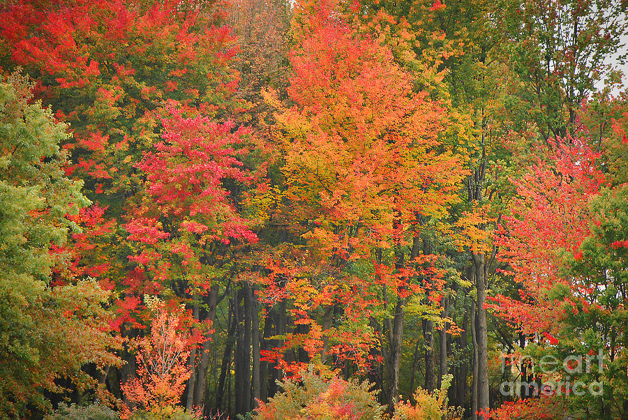 Autumn Photograph - Autumn Woods by Mary Carol Story