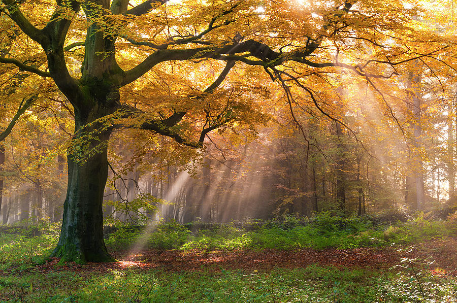 Autumn Woods, Peak District Photograph by John Finney Photography