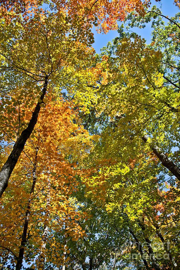 Autumn Woods Sky View Photograph by Cheryl Baxter