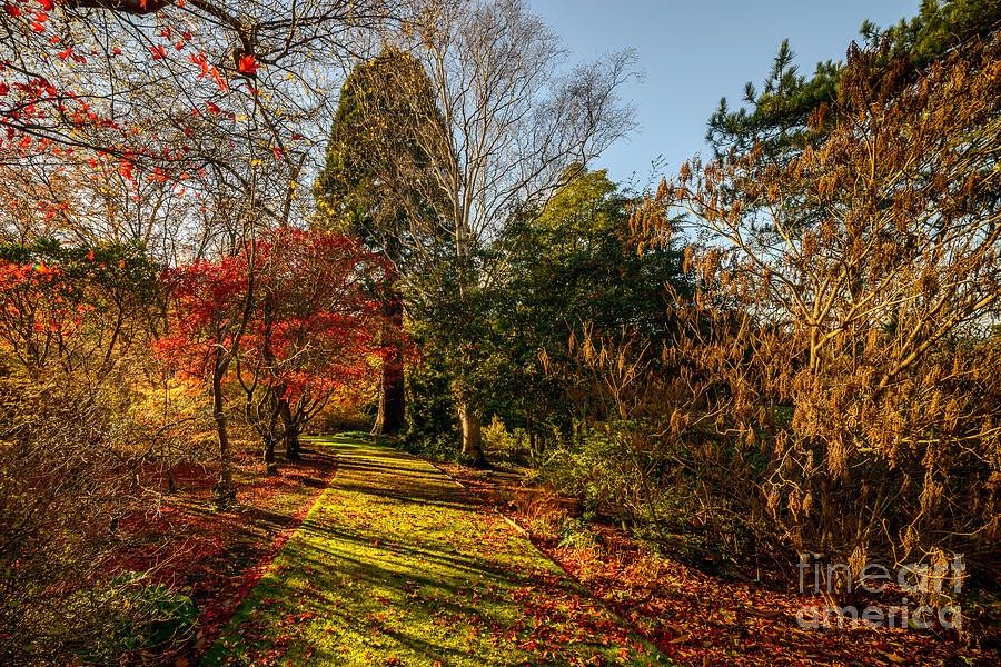 Acer Photograph - Autumnal Forest by Adrian Evans
