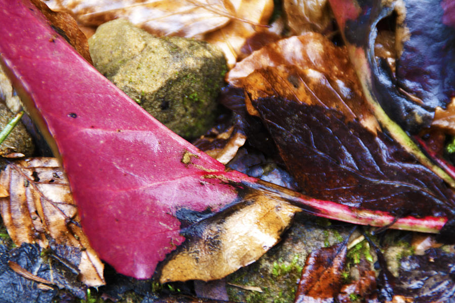 Autumnal Glory  Photograph by Jolanta Erlate