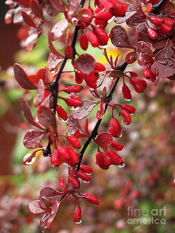 Autumn Photograph - Autumnal Little Wonders_2 by Halyna  Yarova