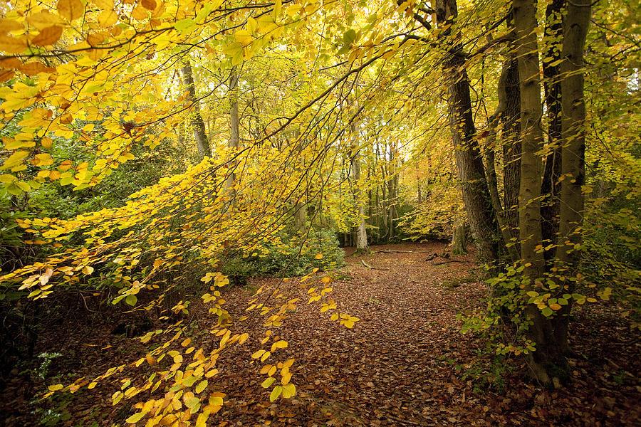 Autumn Photograph - Autumnal Woodland II by Natalie Kinnear