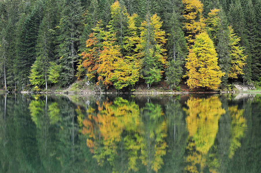 Autumn forest Reflected In Lake Haute Photograph by Andre Gilden
