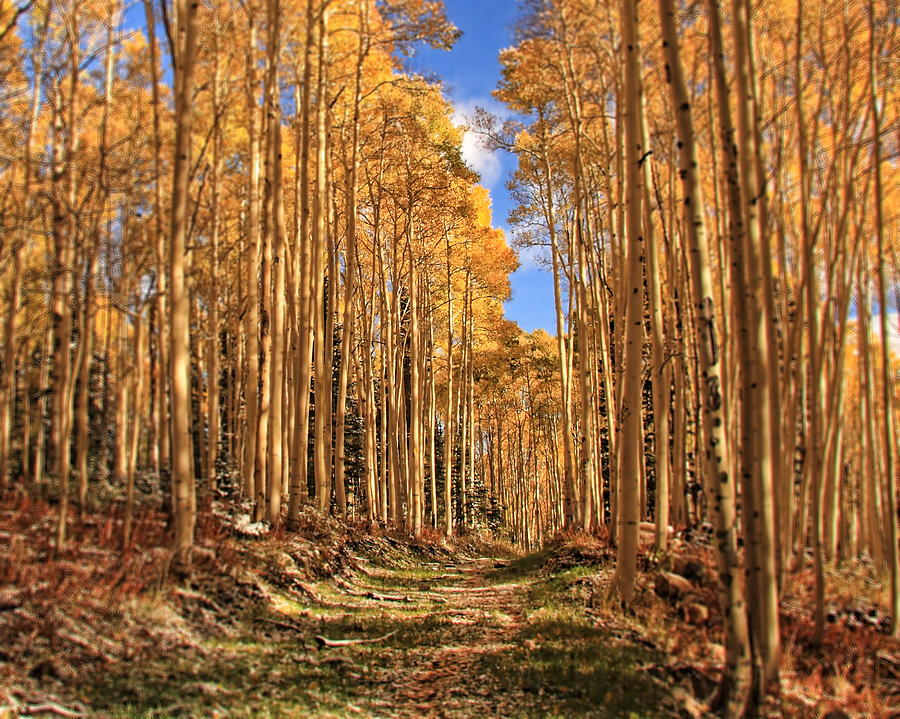 Autumn's Embrace by Gene Praag