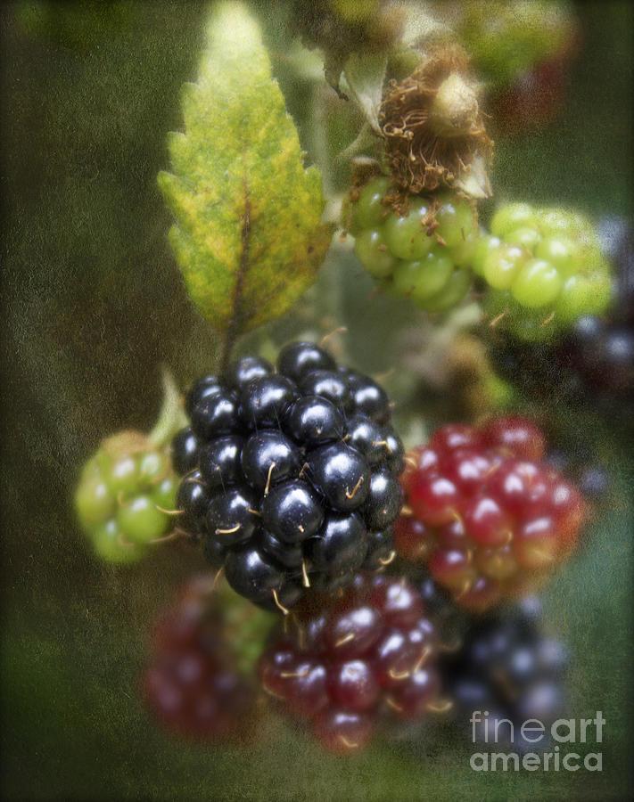 Blackberry Photograph - Autumns Fruit by Michelle Orai