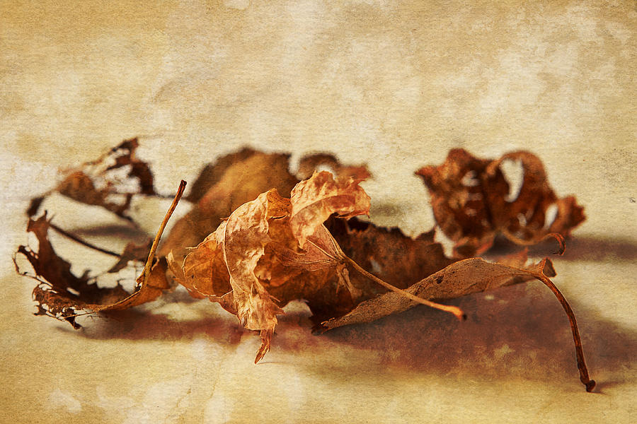 Autumn Leaves Photograph - Autumns Leavings by Caitlyn  Grasso